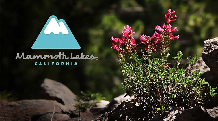 Visit Mammoth - Reds Meadows